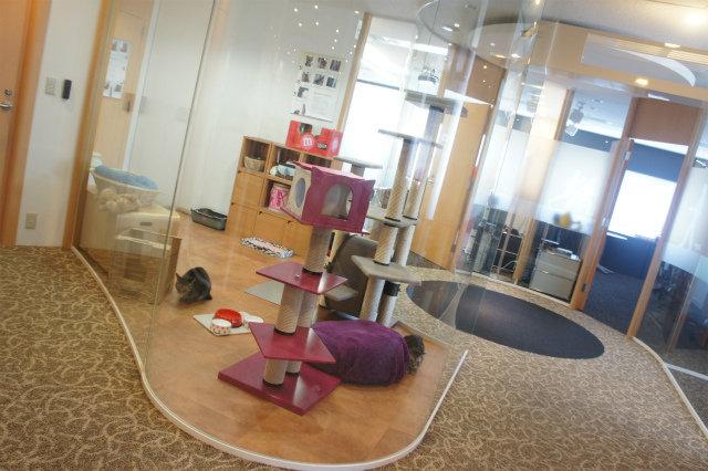 キャットルーム ネコのいるオフィス マース ジャパン リミテッド